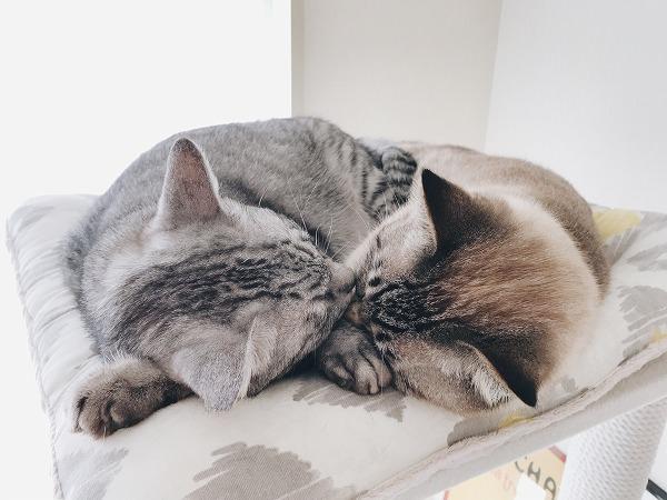 仲良く昼寝している2匹の猫の頭頂部