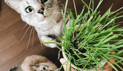 猫草が大好きなベジタリニャンズ
