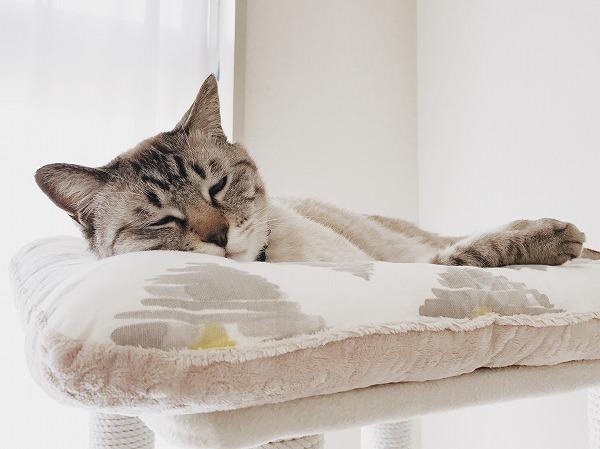 大好きな抱き枕がないと寝られない