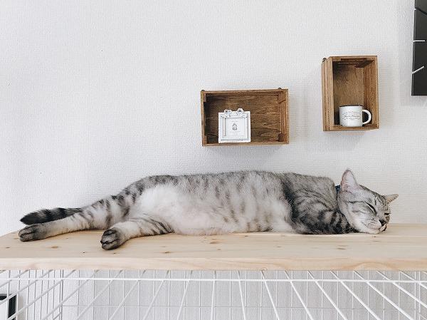 ケージ上の板の上に寝そべっているサバトラ猫