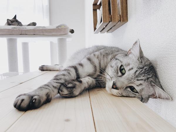足を伸ばして寝そべっている
