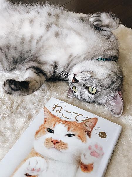 「ねこてそ」で猫の手相(肉球)性格診断をやってみた