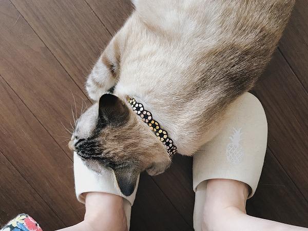 飼い主の足を枕にして寝てしまった