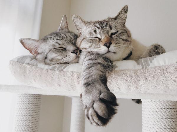 たくましい腕枕