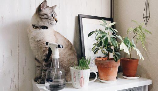 猫草盗み食い現行犯