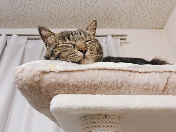 寝顔どアップ×2