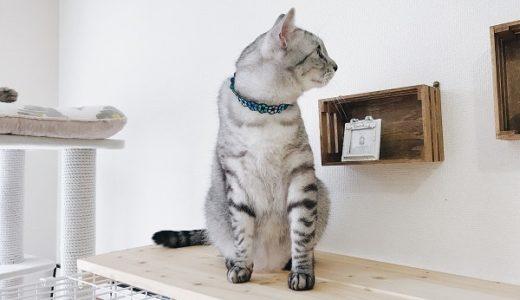 DIYで猫ケージを有効活用