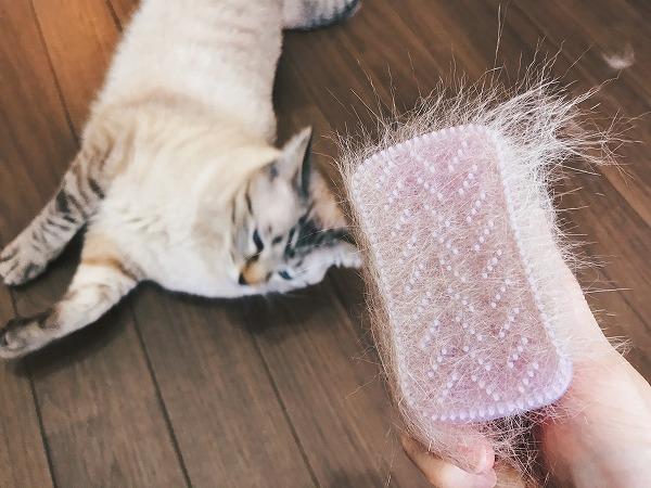 ブラシにごっそり付いたフワフワの猫の毛。