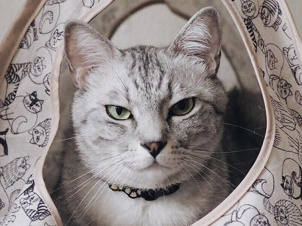 悪人顔の猫の顔アップ