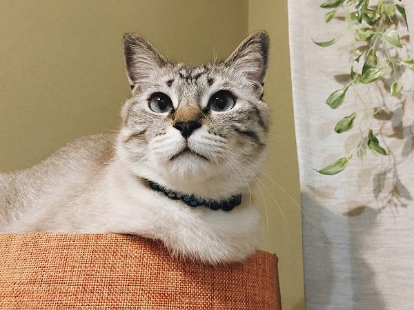 猫を下から見上げるのが好き
