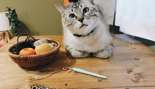 夏っぽい色で猫の首輪を編んでみた