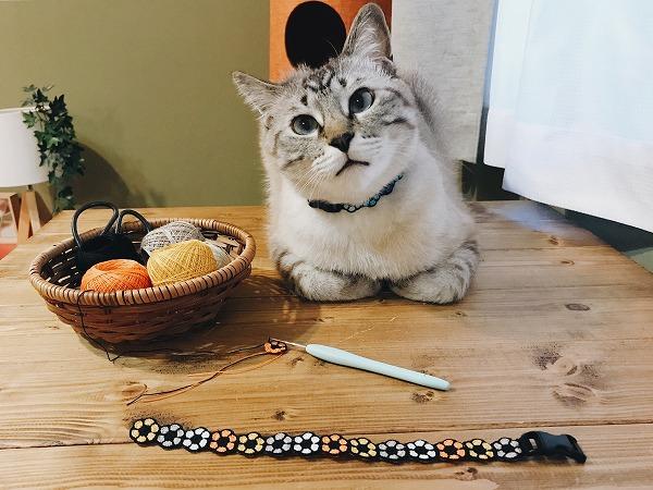 香箱座りで小首をかしげてこっちを見ているシャムトラ猫と、作りかけの猫用首輪