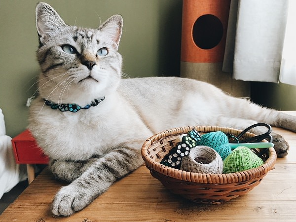 寝そべるシャムトラ猫と編み物セット