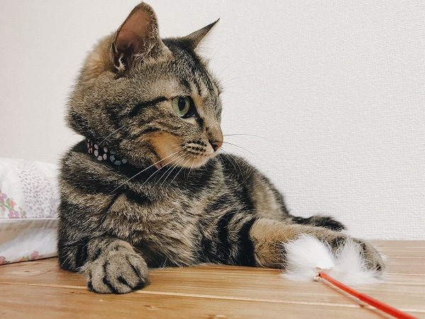 猫「こんなフワフワごときで我らの狩猟本能が目覚めるとでも?」