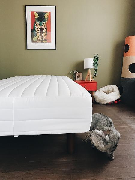 新しいベッドは誰のもの?