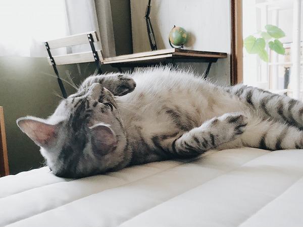 ベッドに体を擦り付けているサバトラ猫