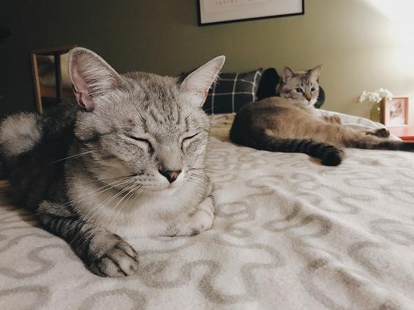 ベッドを独占している猫たち