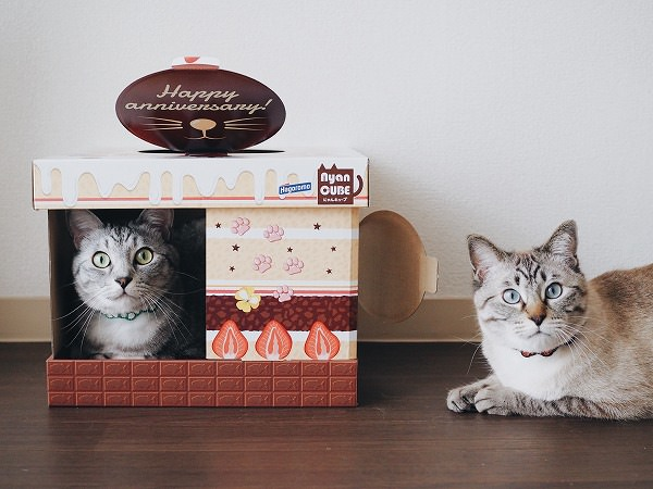 ケーキ柄のダンボールハウスに入っているサバトラ猫(と外にいるシャムトラ猫)