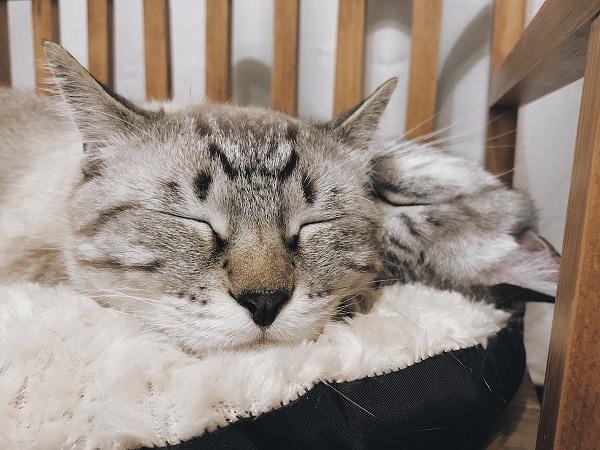 かわいい寝顔