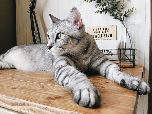 世界猫の日2017