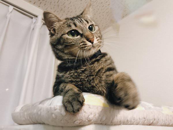 猫パンチの構え