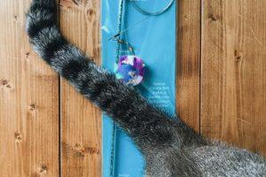 猫用おもちゃ「ダ・ボール」と猫のしっぽ