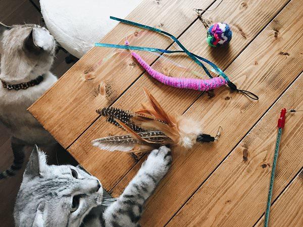 机に並べたおもちゃに手を伸ばすサバトラ猫