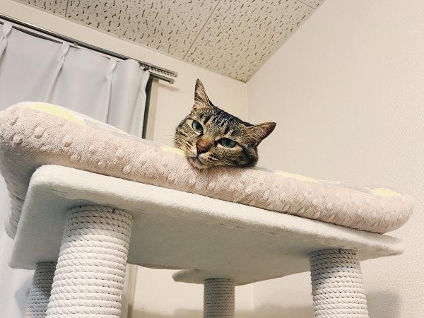 生首猫が見てる