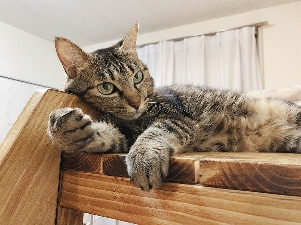 はしごの角に頭を乗せているキジトラ猫