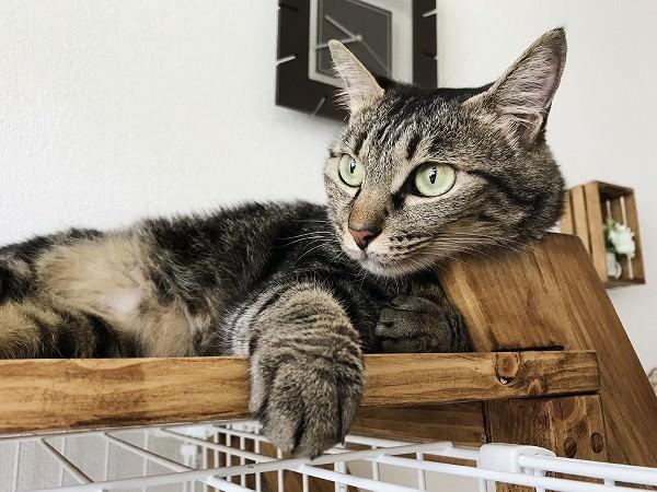 はしごの角に顔を乗せているキジトラ猫