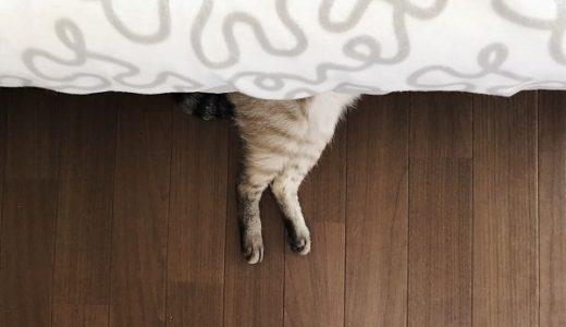 ベッドの下から猫の太ももがはみ出ている