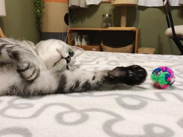 あきれるほど面倒くさがりな猫