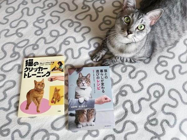 猫のクリッカートレーニングに挑戦!