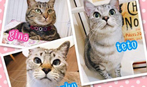猫プロフィール画像