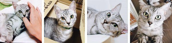 サバトラ猫テトの紹介