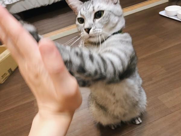 両手でタッチ