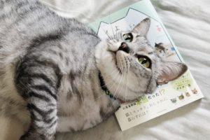 「猫がよろこぶインテリア」を枕にしているサバトラ猫