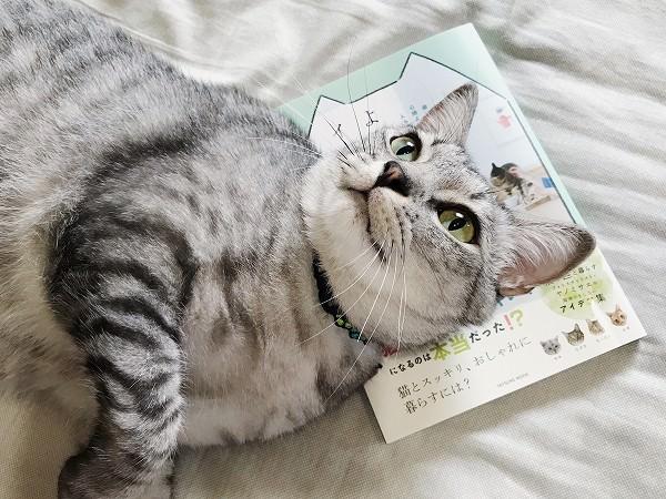 「猫がよろこぶインテリア」我が家もちょこっと掲載されてます