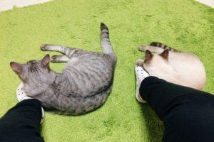 そっくりな後ろ姿の兄弟猫