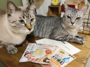 机の上に並べたキャットフードのサンプルと、サバトラ猫とシャムトラ猫