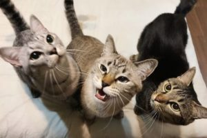 揃って上を見上げている3匹の猫たち