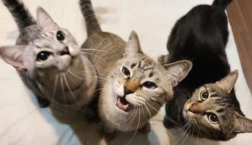 めずらしいおやつをあげてみたら猫たちの反応が尋常じゃない件
