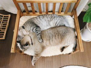 仲良く並んで寝ている2匹の猫