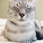 恵比寿顔のサバトラ猫