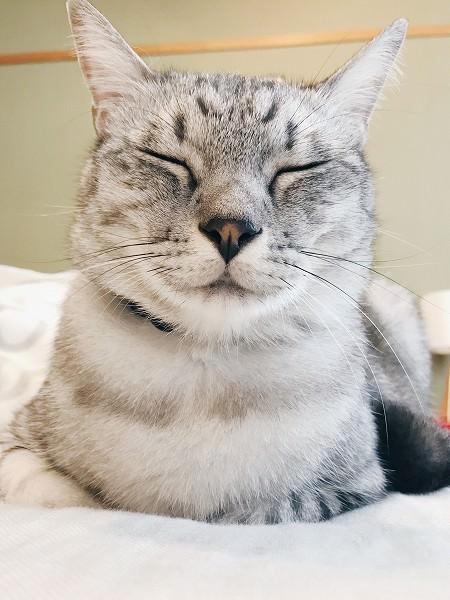 うちの猫は天使というより菩薩のような顔をしている