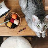 机の上のレース糸とサバトラ猫