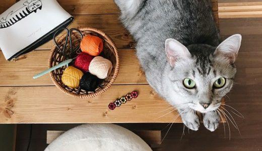 秋色の猫首輪