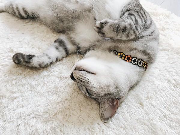 秋っぽい色の猫首輪