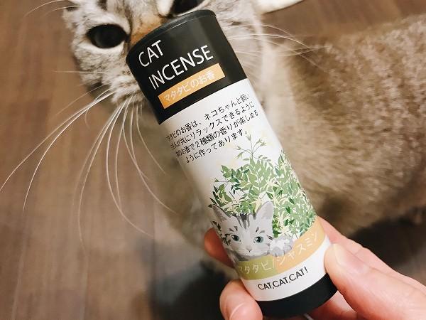 マタタビのお香を焚いた時の猫たちの反応