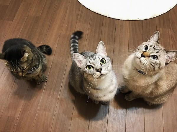 マタタビのお香に興味津々の猫たち
